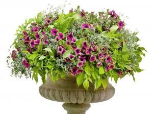 Maceta de piedra con flores y plantas