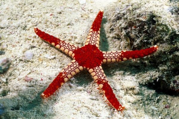 Estrella de mar en el suelo marino
