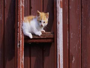 Postal: Gatito subido en la escalera roja