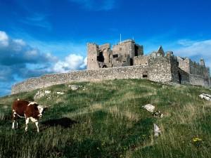 Vaca pastando cerca de un castillo