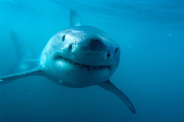 La cara del tiburón