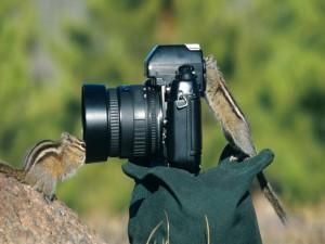 Ardillas jugando con una cámara
