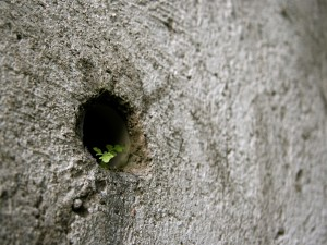 Postal: Planta que crece en la roca
