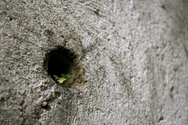 Planta que crece en la roca