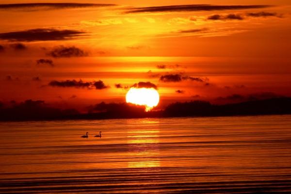 Cisnes en el lago al atardecer
