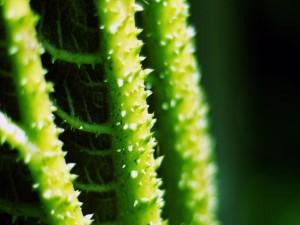 Tronco de una planta con pinchos