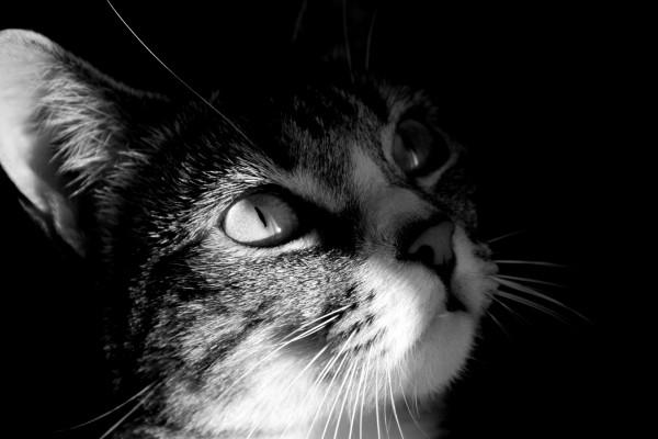 Foto en blanco y negro de un gato