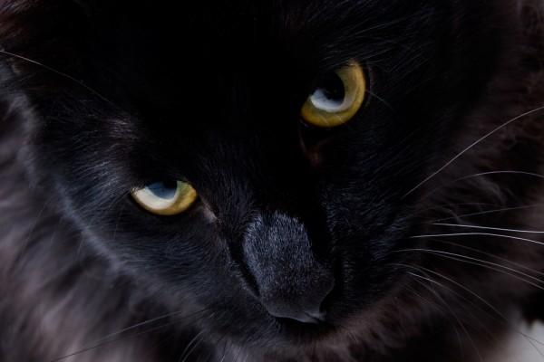 Gato negro de ojos dorados