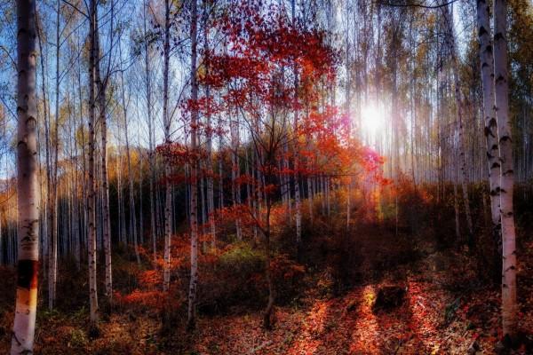 En el bosque por la mañana