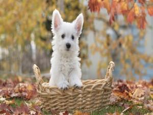 Perrito rodeado de hojas en otoño