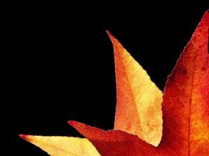 Hojas de otoño en un fondo negro