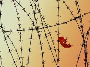 Postal: Hoja entre alambre de espino