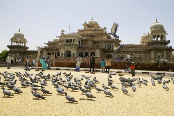 Palomas en una calle de la India