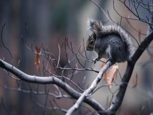 Ardilla en el árbol