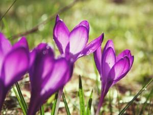 Postal: Flores que reciben la luz del sol