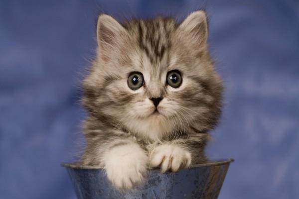 Gatito en un cubo