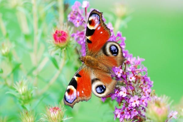 Mariposa de bonitos colores