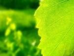 Hoja verde recibiendo la luz del sol