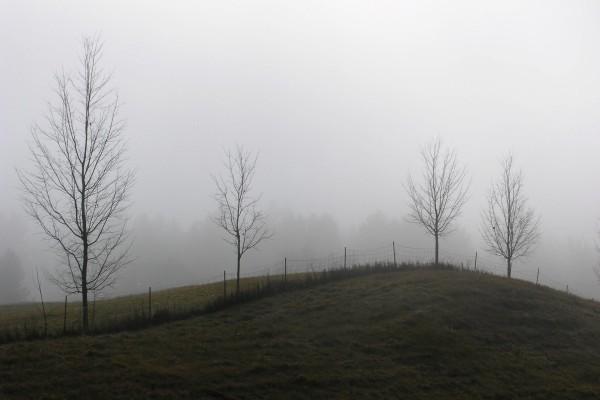 Árboles ocultos por la niebla