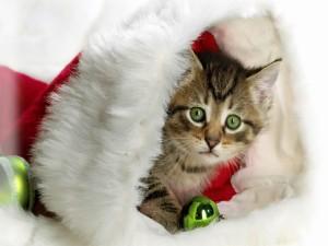 Gatito dentro del gorro de Papá Noel