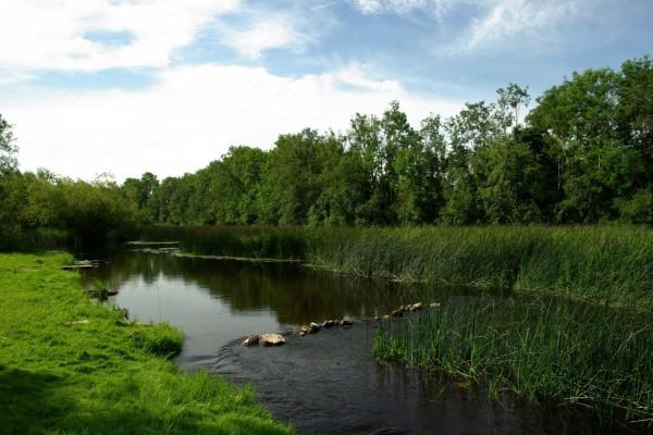 Río entre vegetación verde