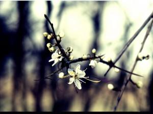 Una rama con flores blancas