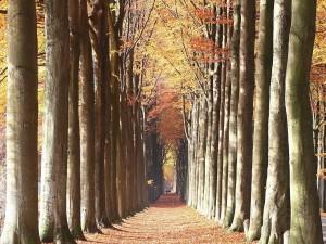 Postal: Sendero de árboles