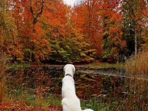 Postal: Perro mirando el paisaje otoñal