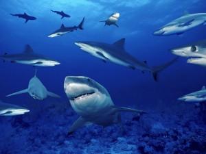 Tiburones cerca del lecho marino
