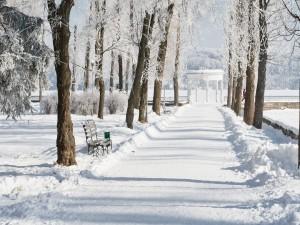 Postal: Nieve en el parque