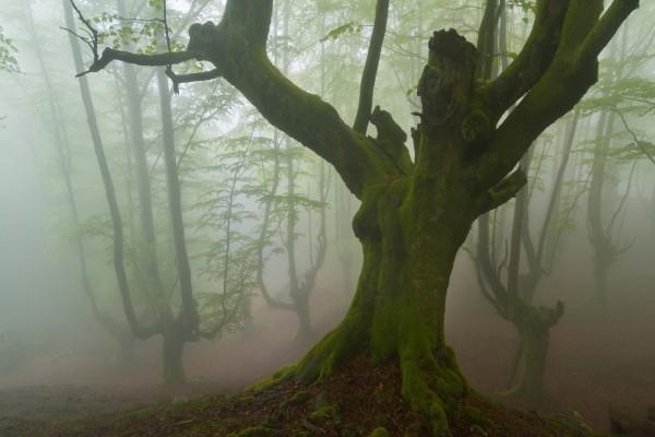 Un árbol verde por el musgo