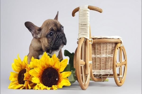 Un perro con cara de desconcierto