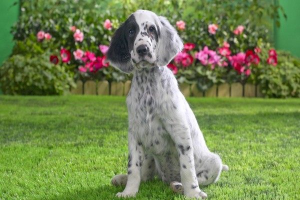 Perro sentado en el jardín