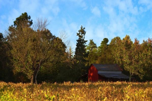 Granero cerca de los árboles