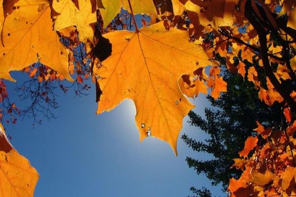 Las hojas de otoño cubren el sol