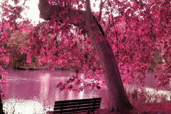 Atardecer rosa