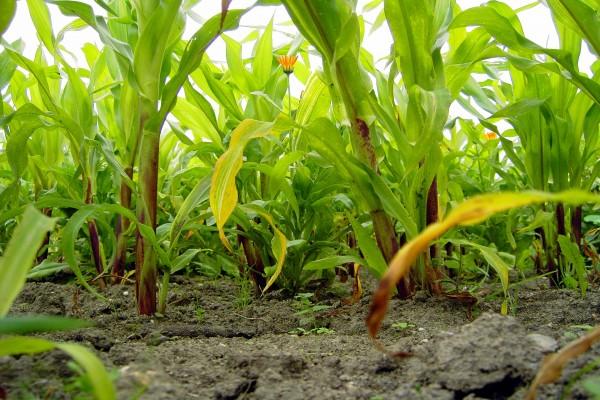 Plantas que crecen en el suelo