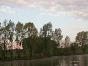 Postal: Árboles cerca del agua