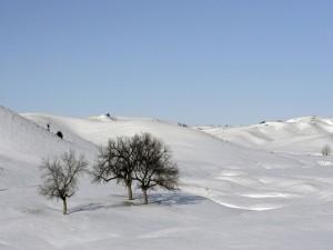 Postal: Árboles en un paisaje nevado