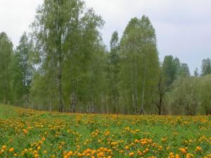 Postal: Árboles y flores amarillas