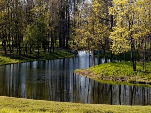 Postal: Río entre la arboleda