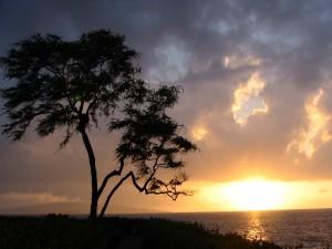Postal: Un árbol presenciando la magia del amanecer