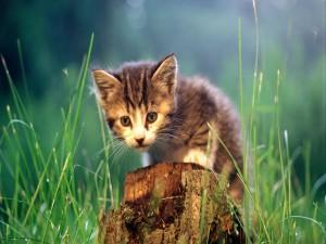 Postal: Gatito con cara triste en la hierba