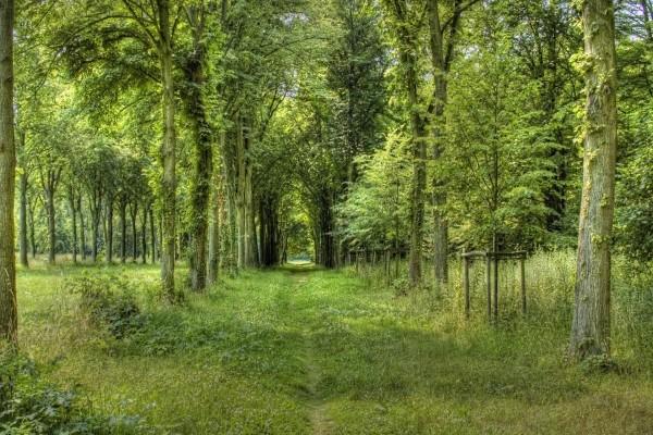 Camino verde entre los árboles