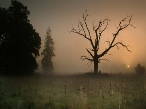 Postal: Niebla al atardecer