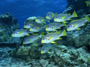 Postal: Grupo de peces cerca de rocas marinas