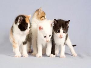 Postal: Cuatro preciosos gatitos