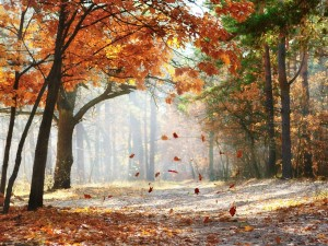 Postal: La caída de las hojas en otoño