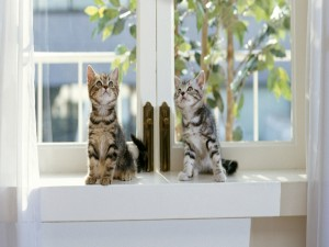 Postal: Gatitos mirando al techo