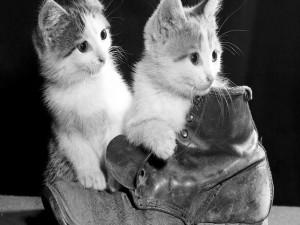 Postal: Dos gatitos jugando con una bota